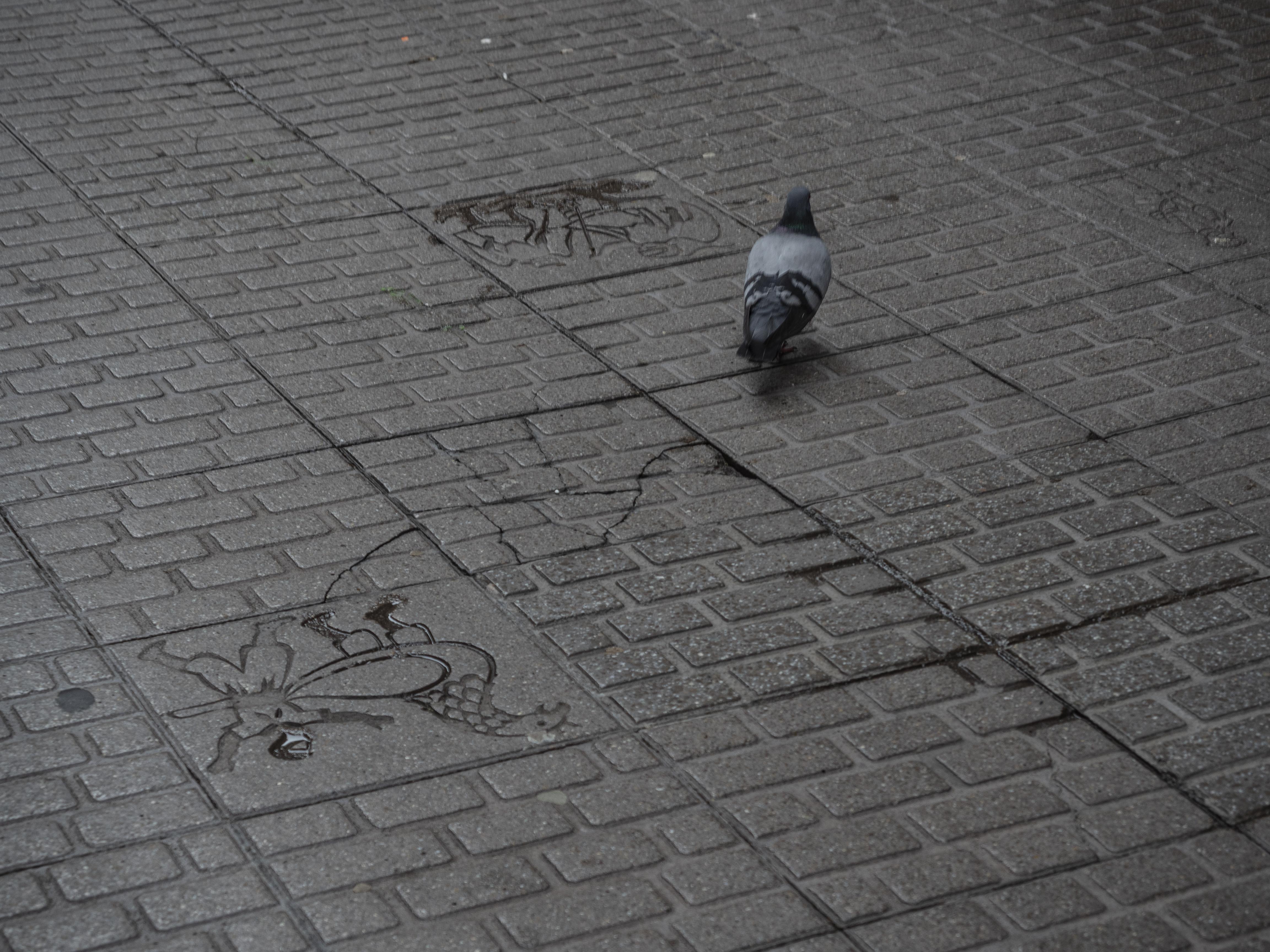 Les rajoles del Carrer Major de Berga llueixen, també, símbols patumaires. FOTO: Anna E. Puig