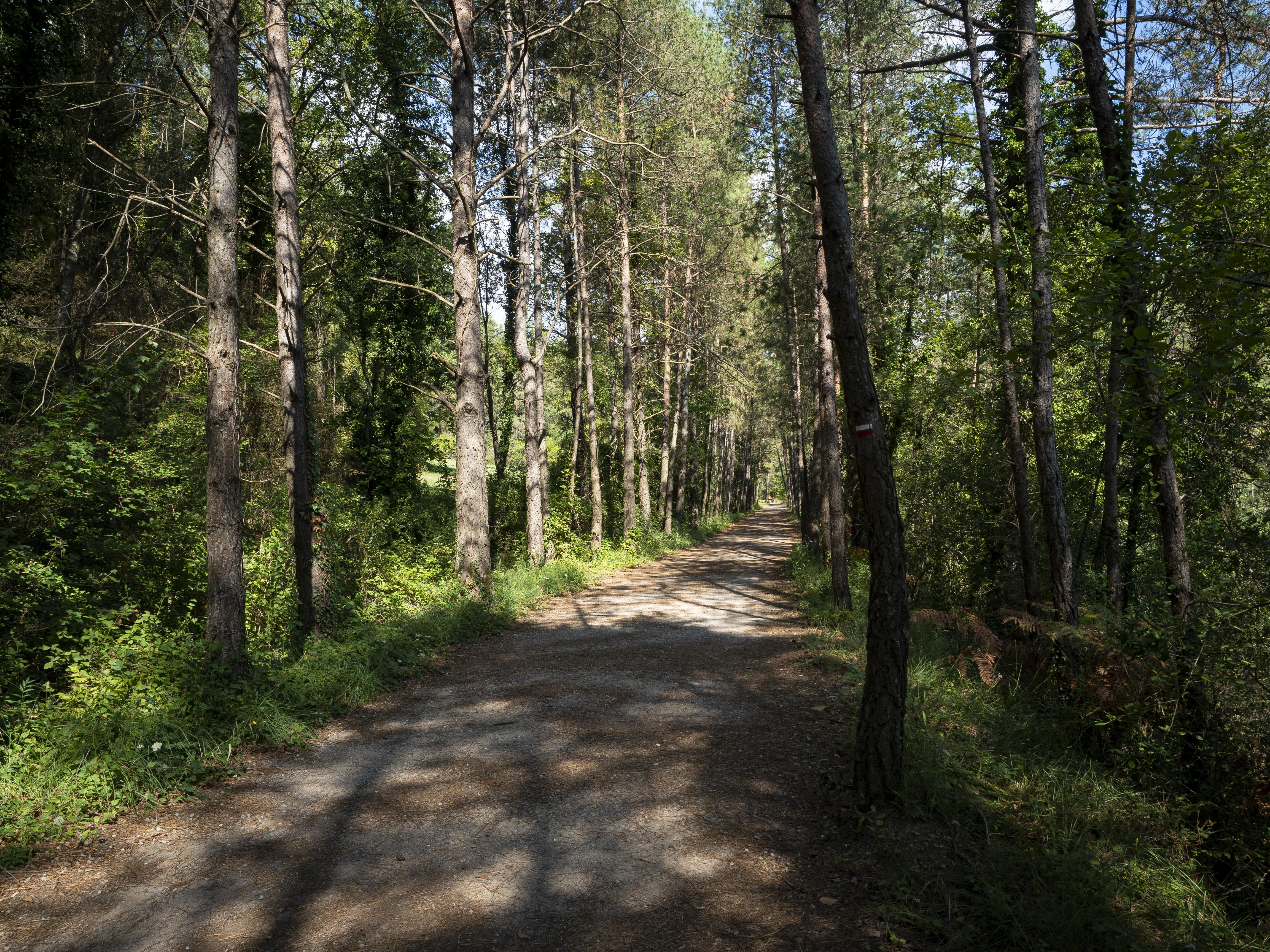 La Via Verda de Cal Rosal a Pedret compta amb paisatges agradables. FOTO: Anna E. Puig