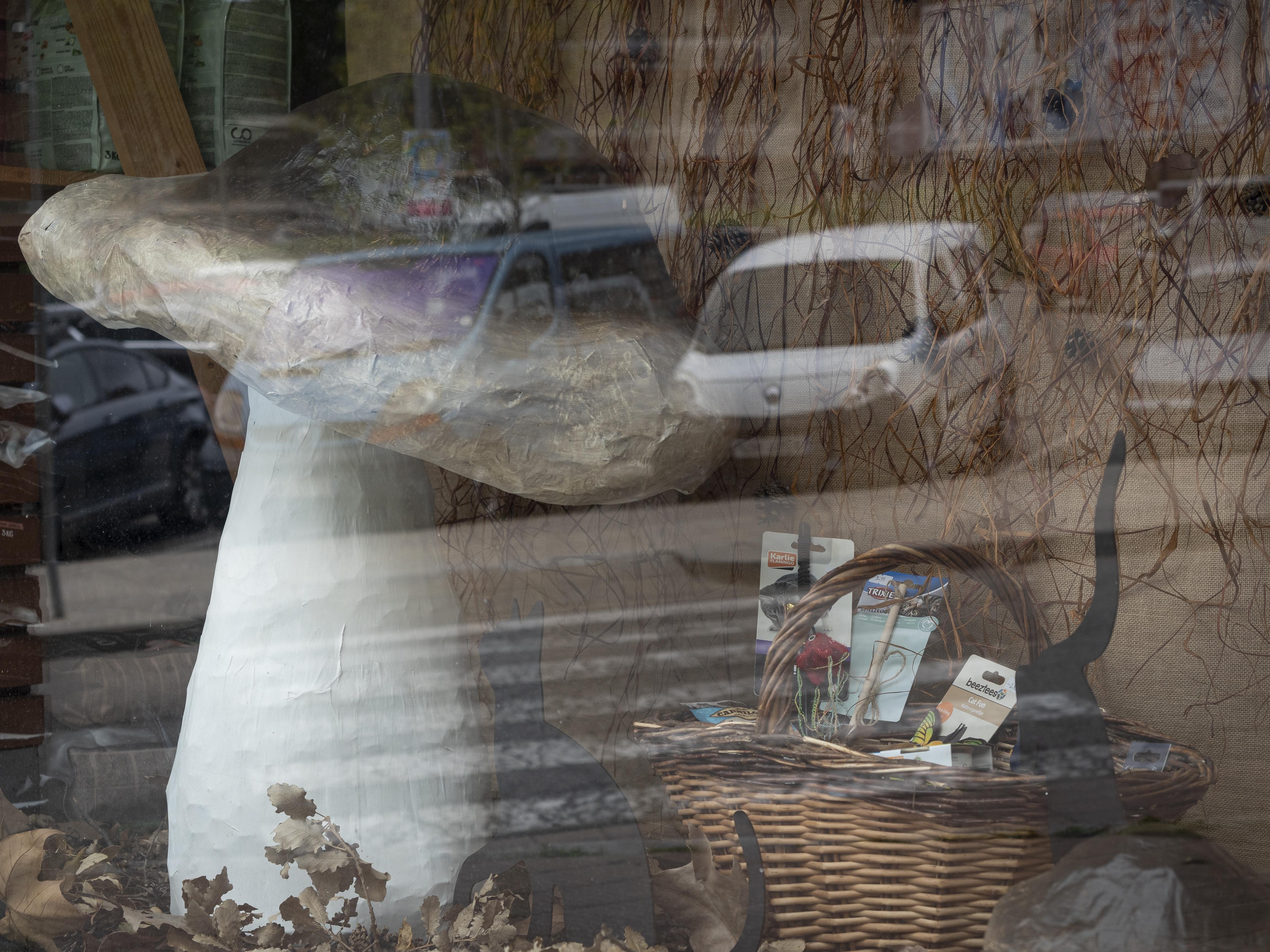El Berguedà és terra de bolets i són ben presents a totarreu. FOTO: Anna E. Puig